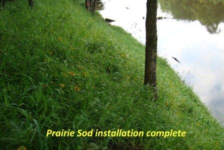 Installed Prairie Sod
