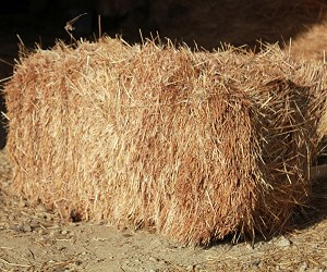 Straw Mulch - Small Bale