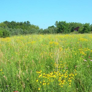 Tallgrass Prairie for Dry Soils