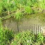 Wetland Emergent Mix