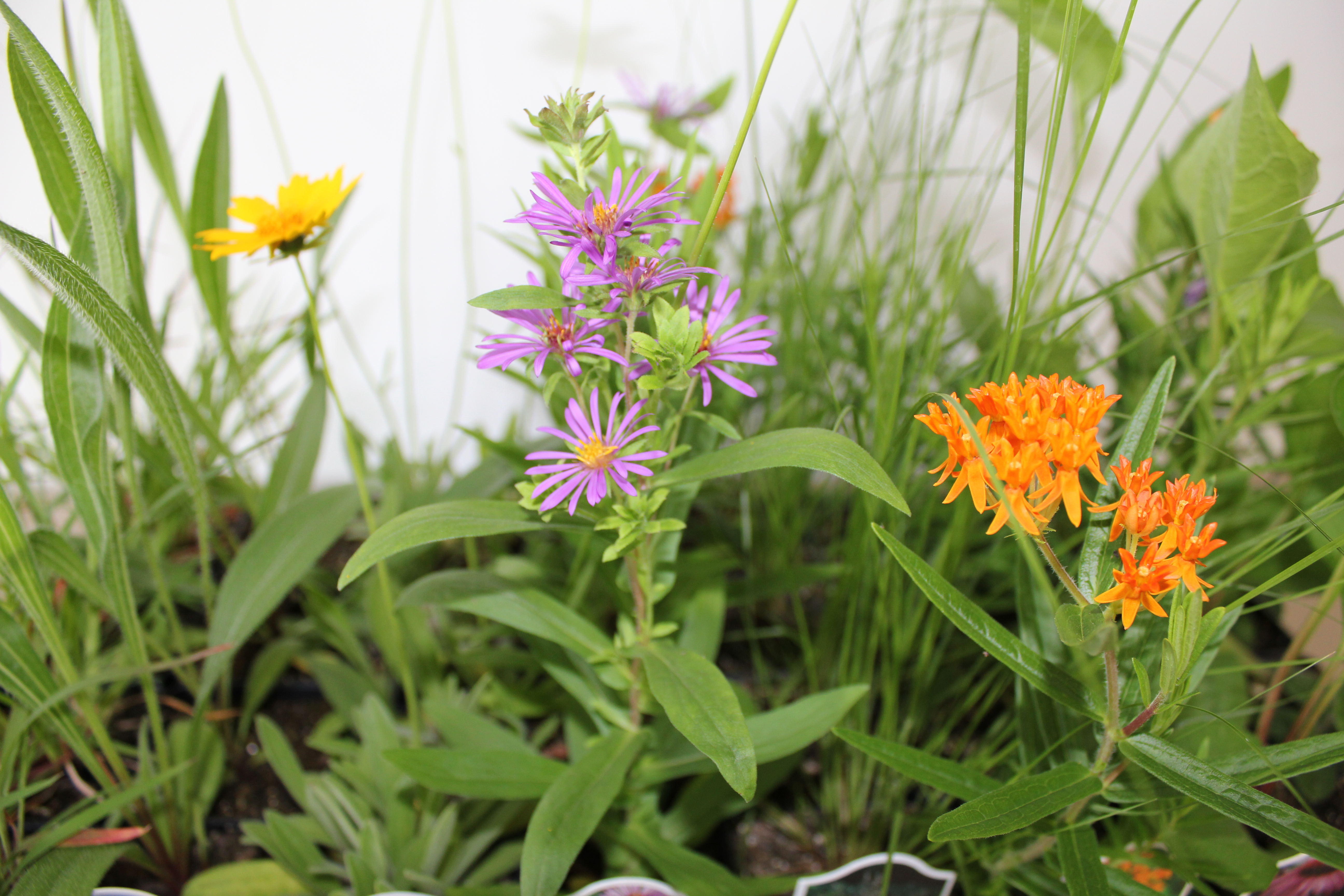 Pollinator Gardens: Plant Selection and Garden Care
