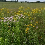 Shortgrass Prairie for Dry Soils