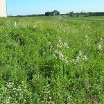 Shortgrass Prairie for Medium Soils